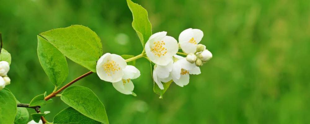 春分节气怎么养生好 春季疾病预防方法 春分节气养生方法
