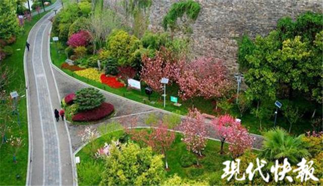 南京这个地方桃花朵朵开 五宝桃、菊花桃等进入盛花期