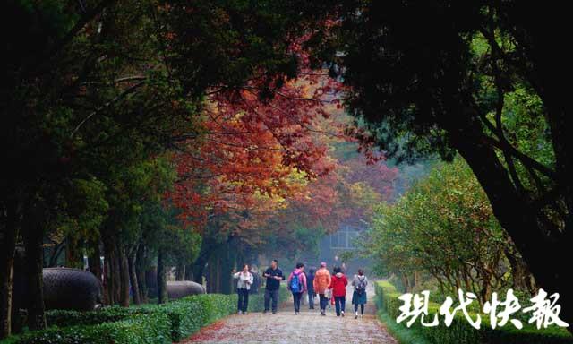 经过秋雨的洗礼,位于明孝陵景区的石象路色彩更加浓艳,红、黄、橙、绿数色相间,美如画卷。秋雨打过落叶,飘落在石像之上,那是属于金陵的古都遗韵。