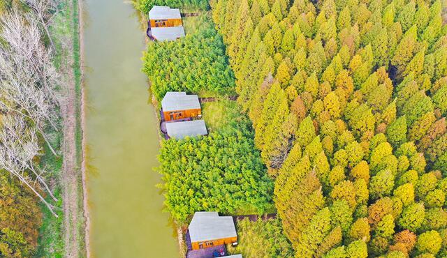 江苏唯一!盐城东台跻身国家森林城市创建行列