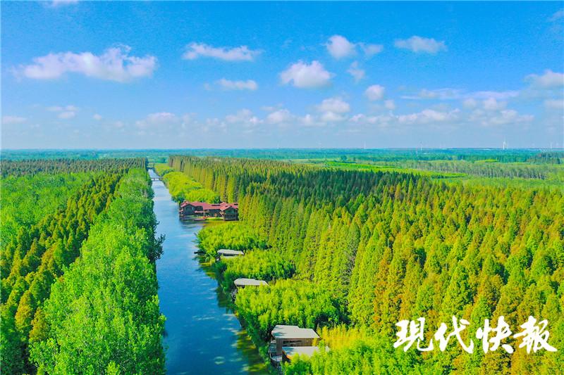 创建国家森林城市是体现城市价值的重要标志。近日,国家林业和草原局正式发文,同意盐城东台创建国家森林城市。记者了解到,此次入列的全国县(市)12家,江苏1家。(张莉琳 摄)