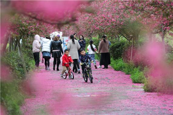 2021南京·浦口第七届望月海棠花节圆满落幕